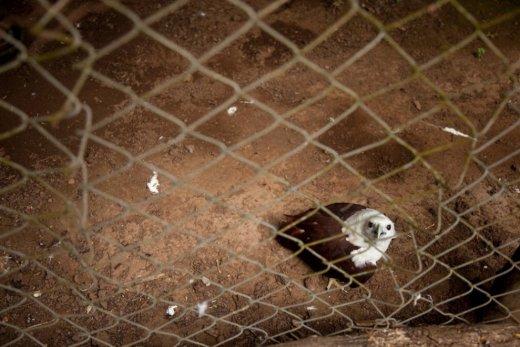 Trishtimi i kafshëve në kopshte zoologjike! Shqipo10