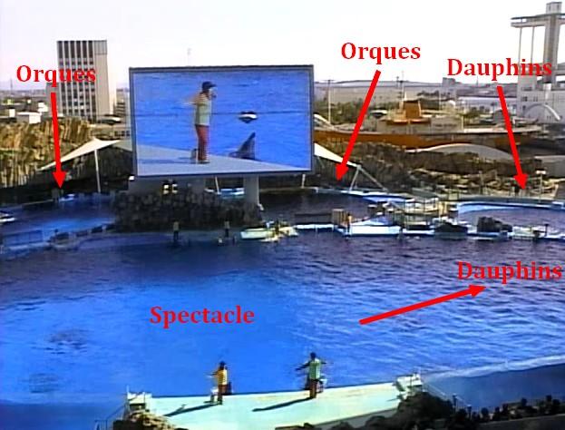 naissance d'un dauphin au Port of aquarium Nagoya, Japon Sans_t12