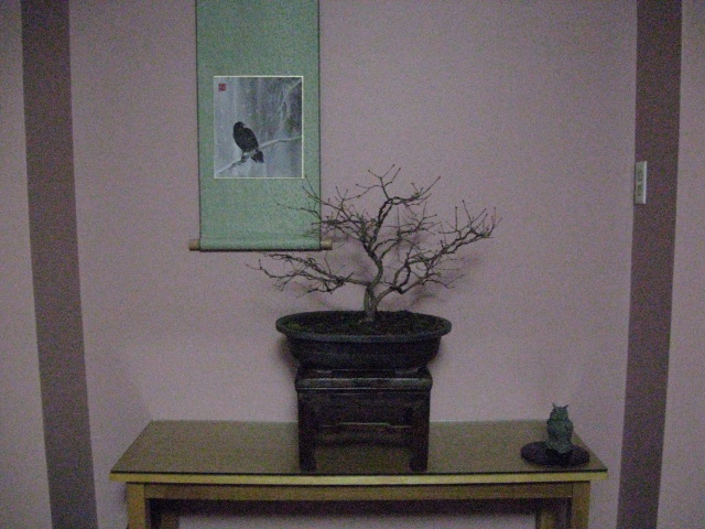 question on bonsai height in relationship to scroll's picture height Img_3115