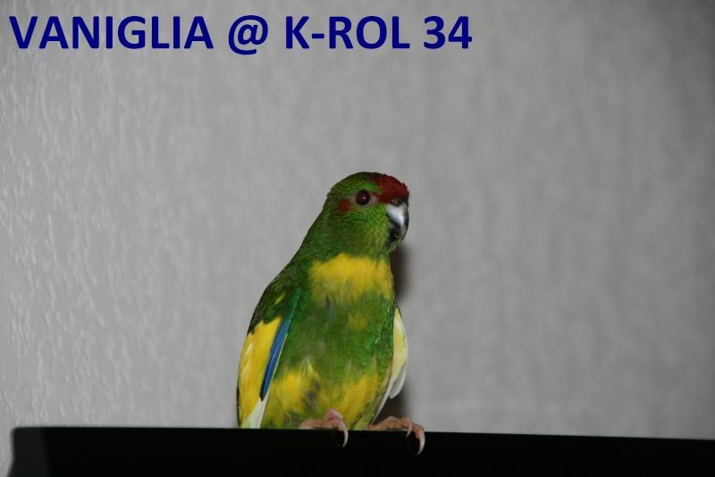 Présentation de Becco et Piuma 34 Vanigl11