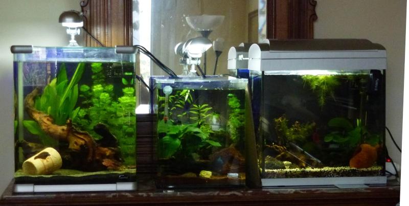 Mes futurs aqua :) evolution ......  Aqua_c10