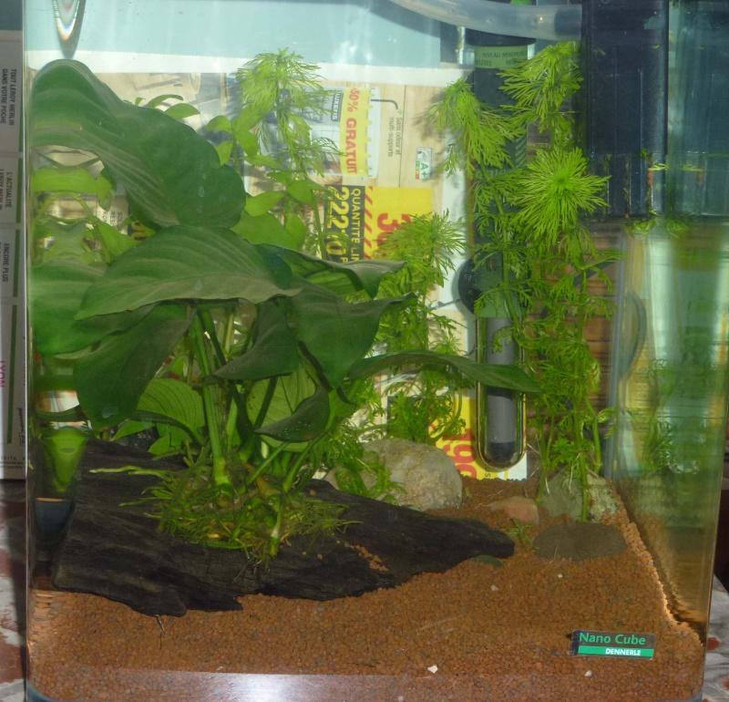 Mes futurs aqua :) evolution ......  Aqua_d11
