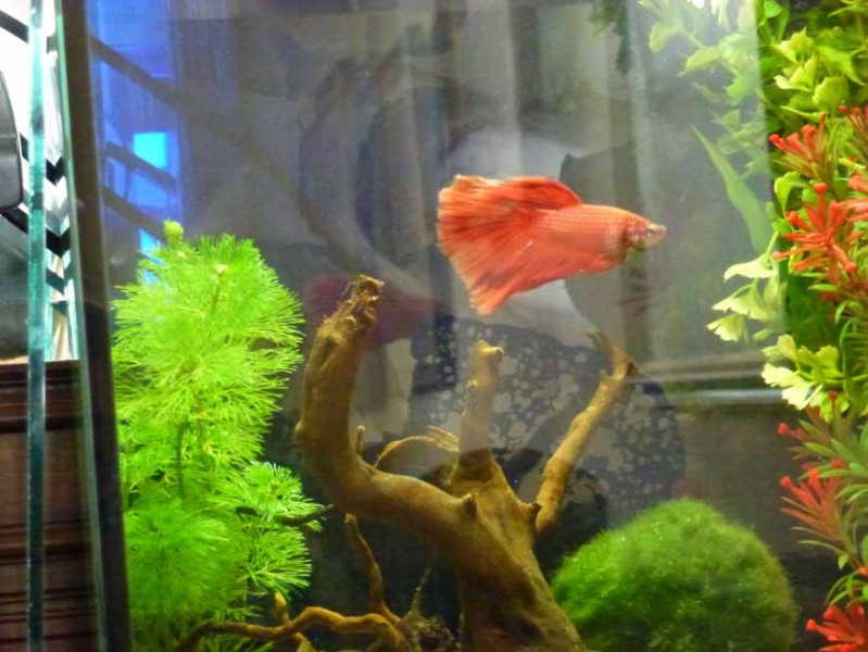 Mes futurs aqua :) evolution ......  P1010610