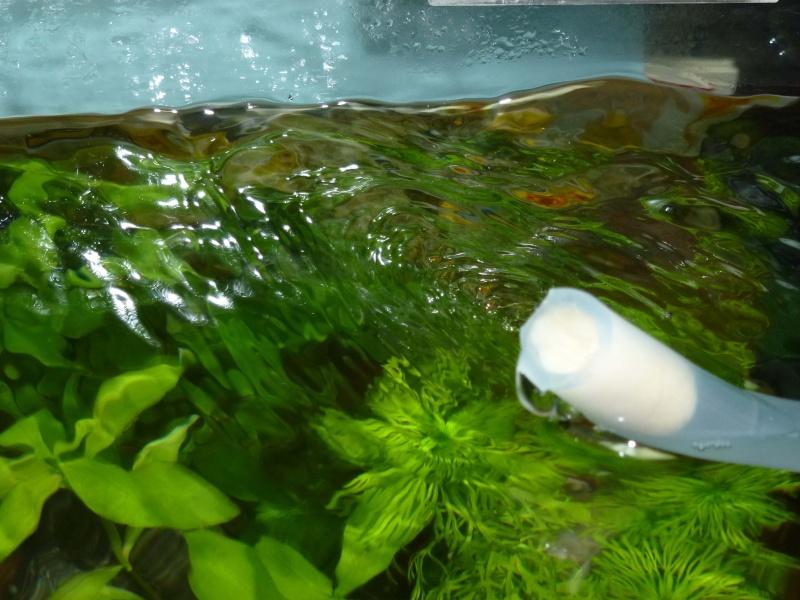 Mes futurs aqua :) evolution ......  Pompe10
