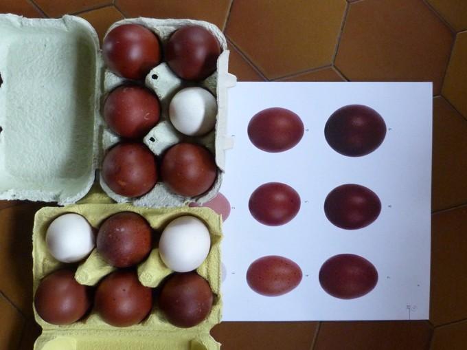 2014 - œufs de mes poulettes Marans 2014 Aufs110
