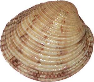 Musée océanographique de Monaco Praire10