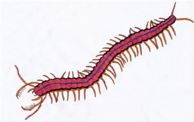 Scorpioscolopendra vs Abominationes delace Scorpi10