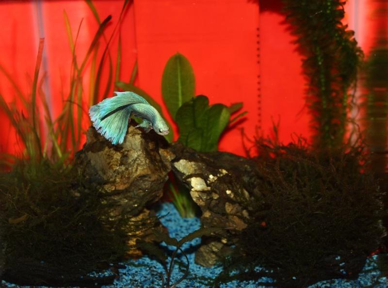 L'Aquarium d'Ange  - Page 2 Img_9210