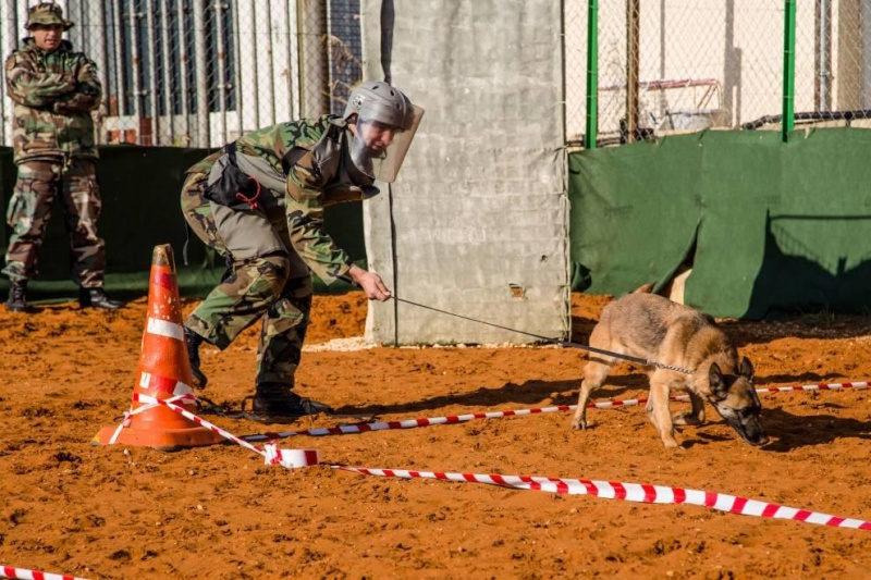 Animaux soldats - Page 2 2285