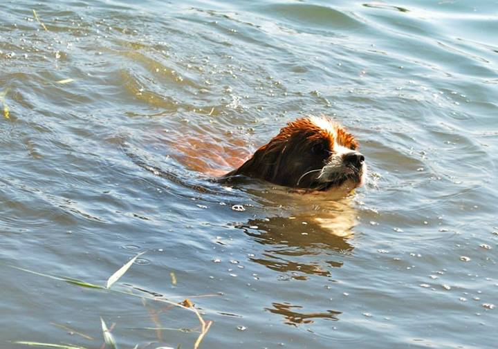 Donner envie de nager/d'aller à l'eau? - Page 2 Scott310
