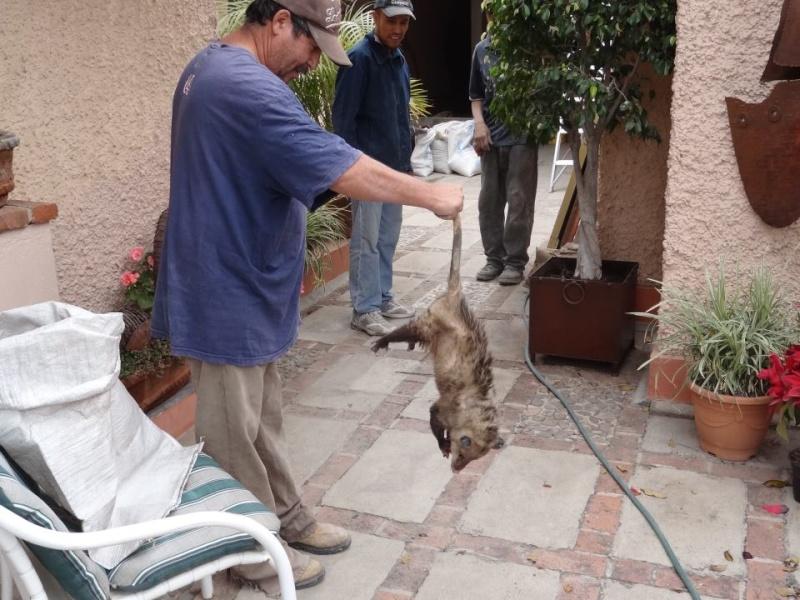 """Found """"cat"""" Possum10"""
