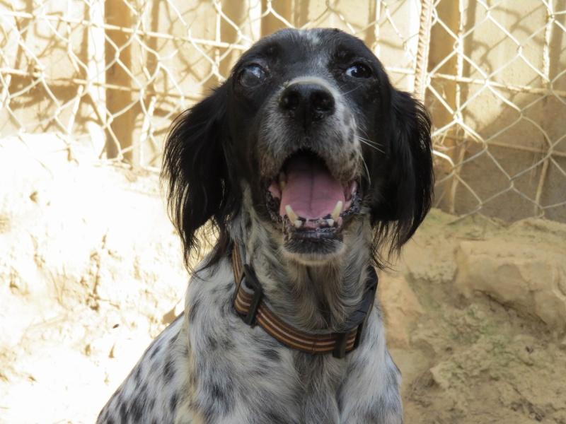 Noah von Tiere in Spanien - ein echter Notfall! Graaye15