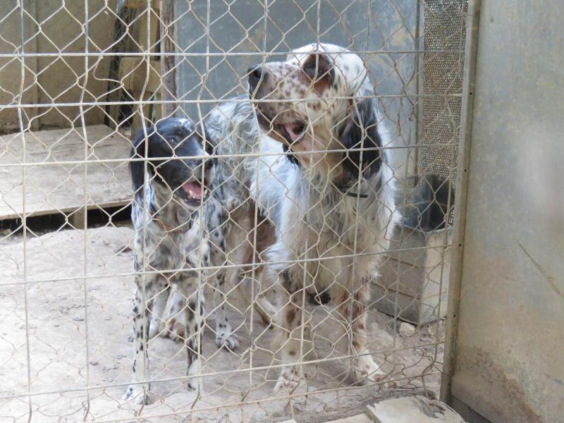 Noah von Tiere in Spanien - ein echter Notfall! Graaye16