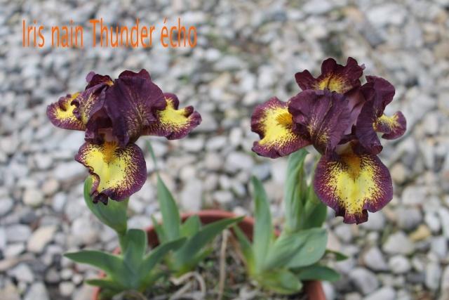 Iris : floraison 2014 - Page 3 13_04_20