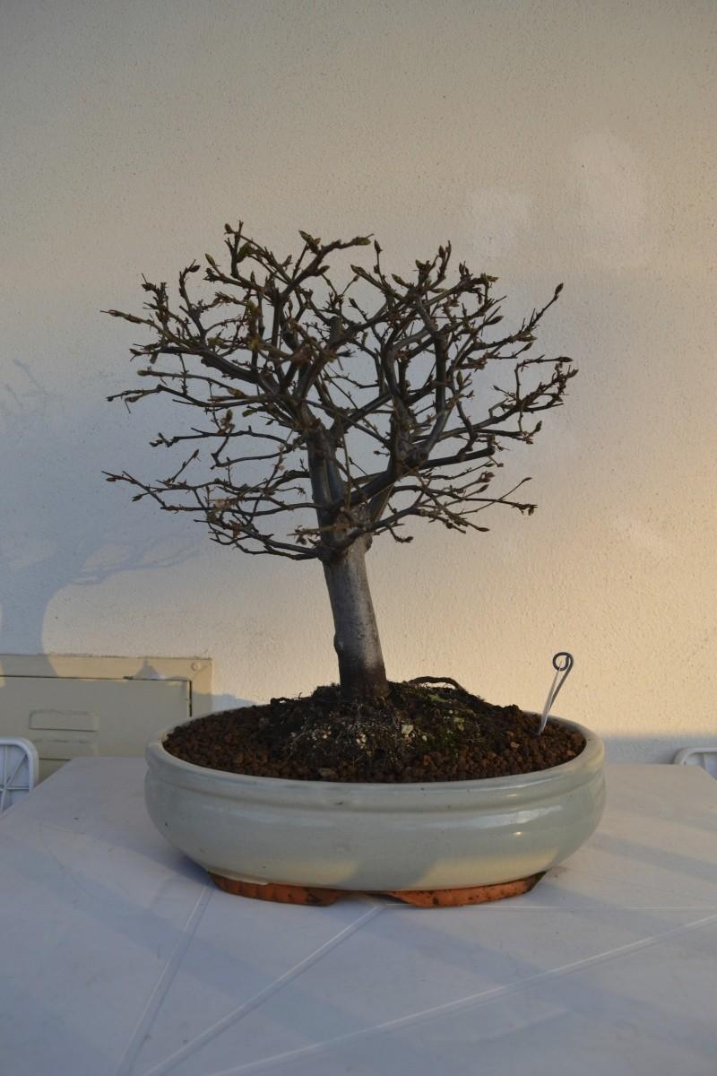una delle prime piante che ho preso.. Dsc_0010