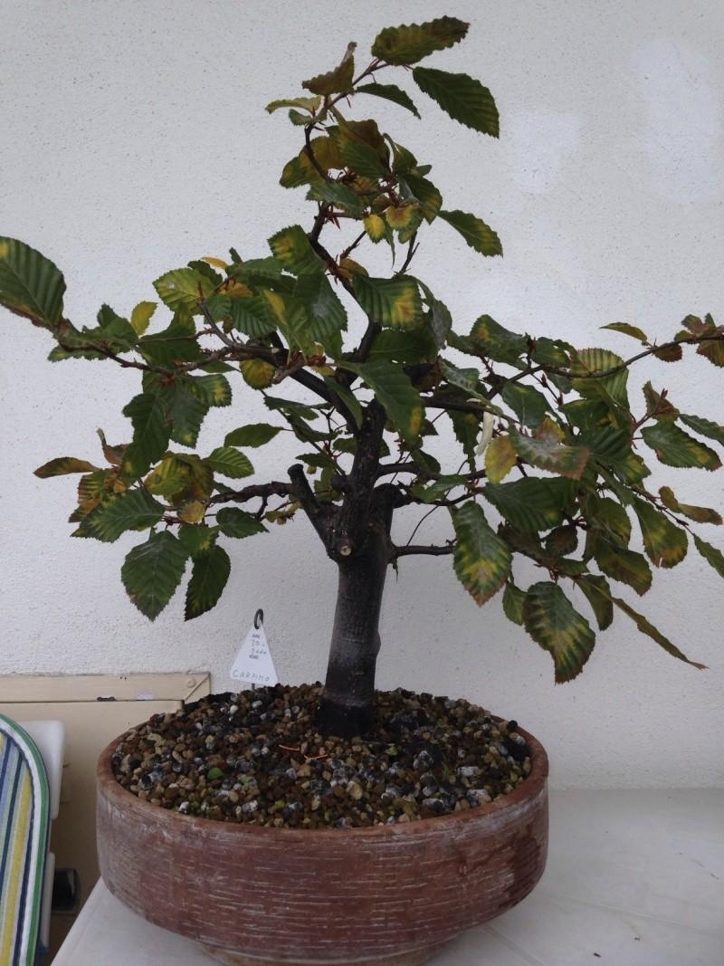 una delle prime piante che ho preso.. Photo111