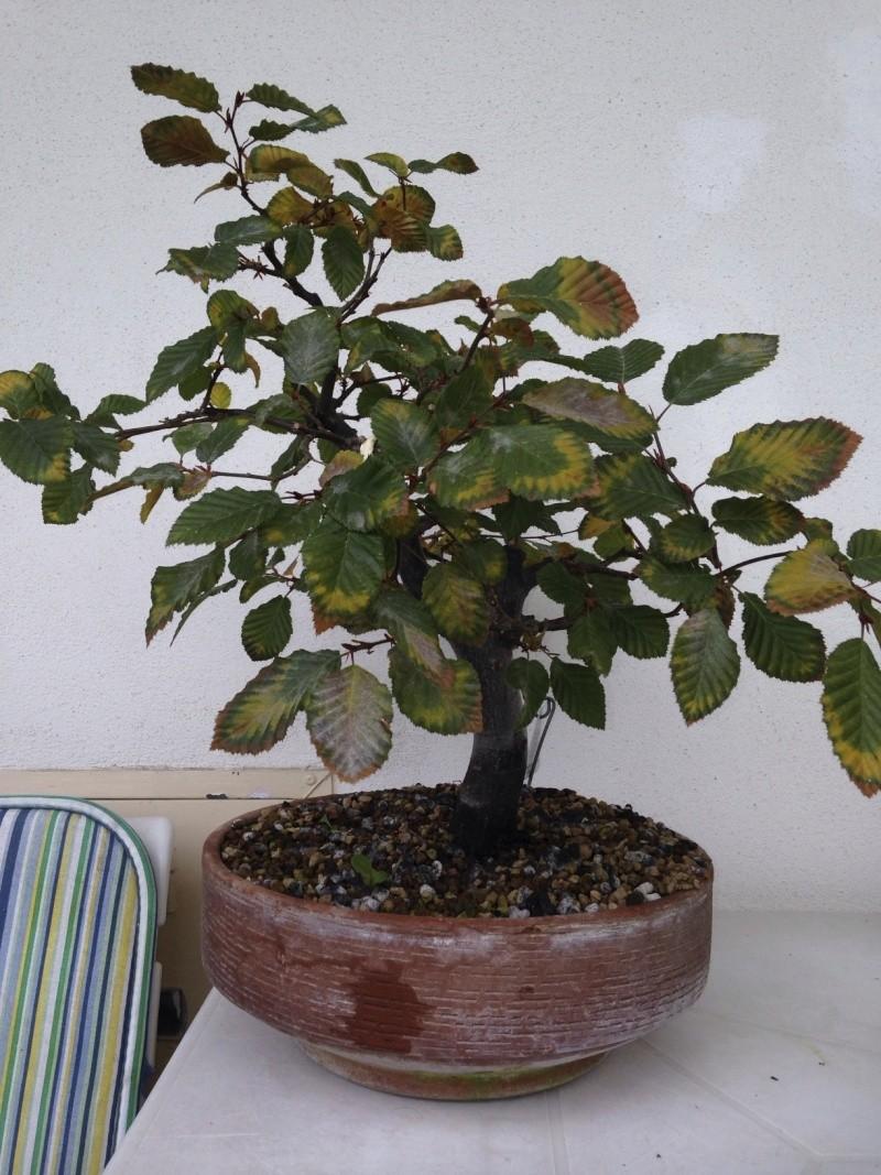 una delle prime piante che ho preso.. Photo112