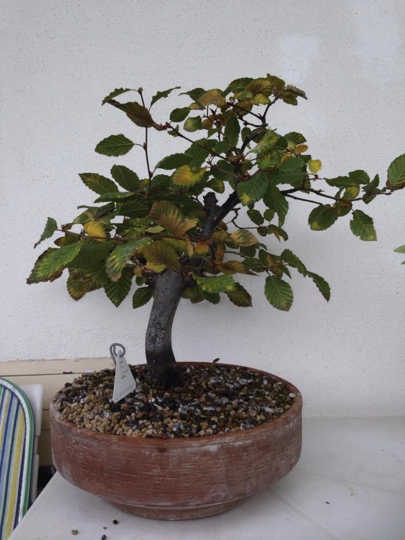una delle prime piante che ho preso.. Photo410