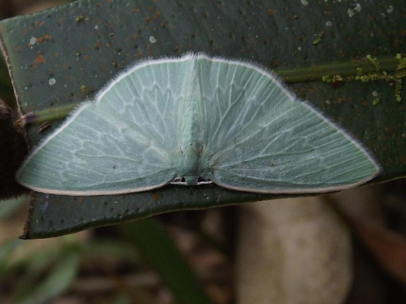 Papillon bleu vert Dscf9610