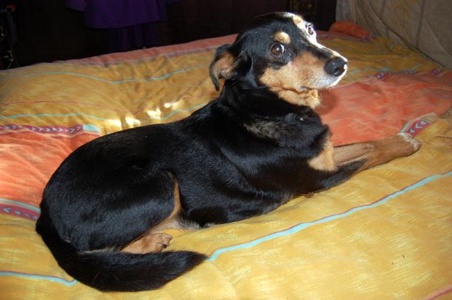 Louna x pinscher de 11ans à l'adoption (60) - Page 2 Iduvv10