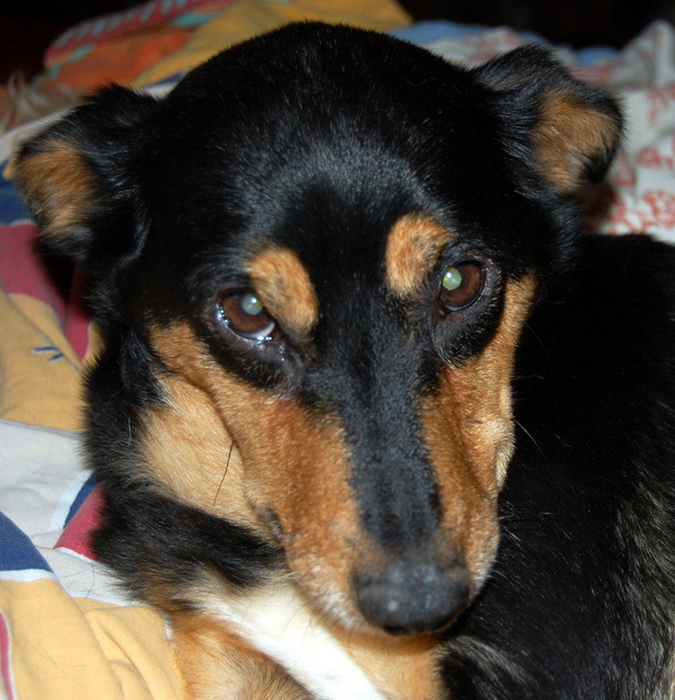 Louna x pinscher de 11ans à l'adoption (60) - Page 2 J7jhk10