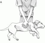 Des formations pour secourir son chien  010