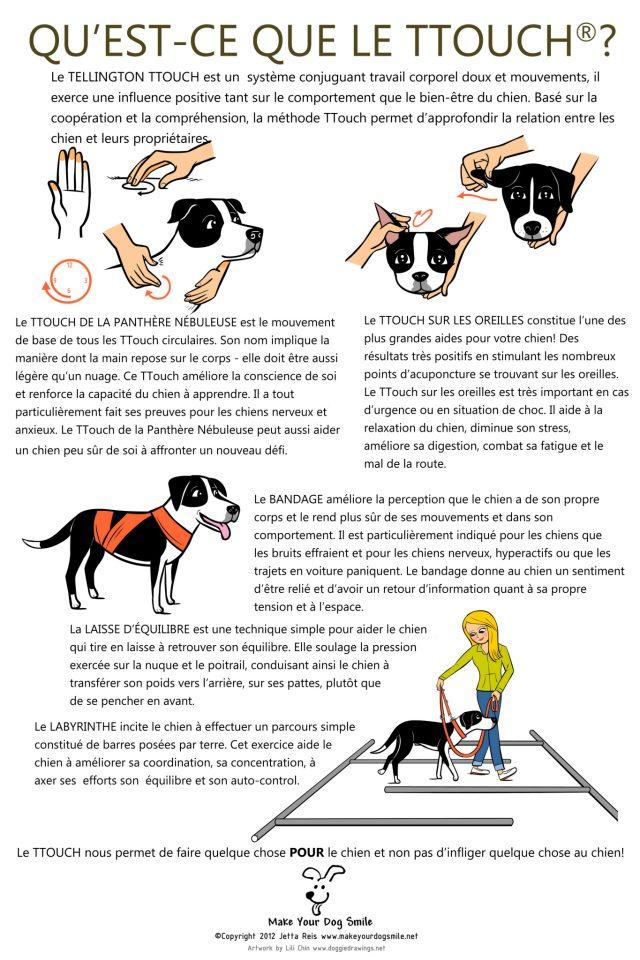 Massage du chien 48747110
