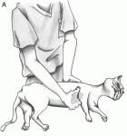 Des formations pour secourir son chien  A10