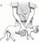 Des formations pour secourir son chien  B10