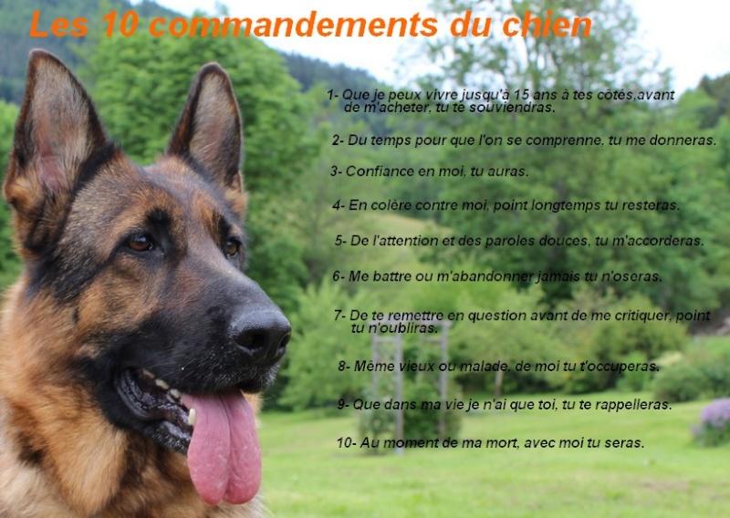 les 10 commandements du chien. Les_1011
