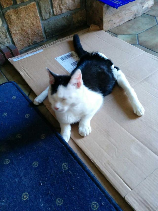 Loulou, chat mâle de 6 mois, paraplégie et incontinence Image-11