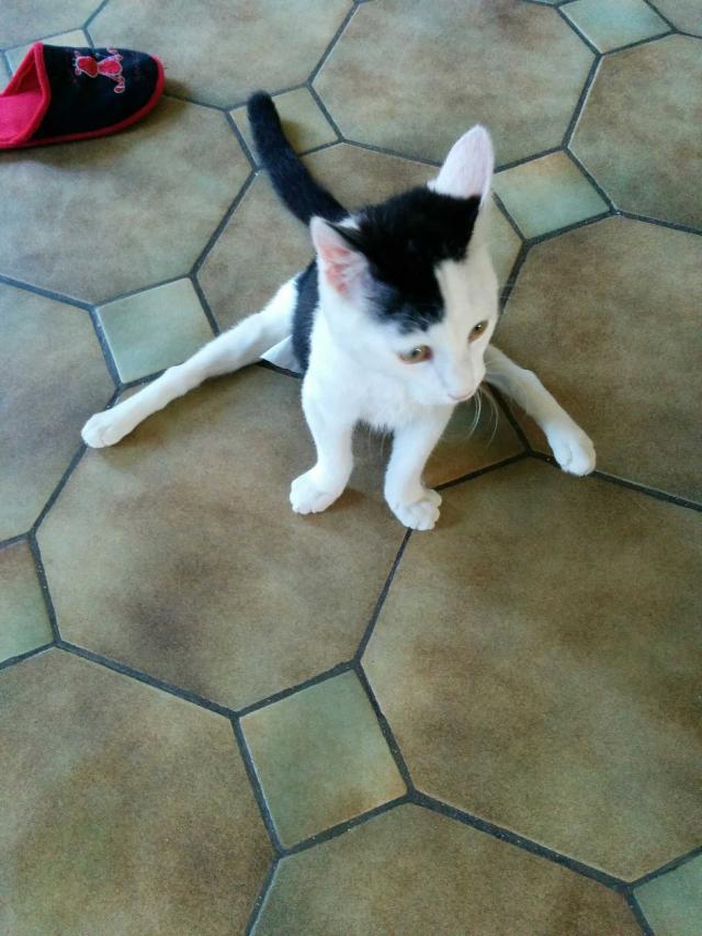 Loulou, chat mâle de 6 mois, paraplégie et incontinence Image10