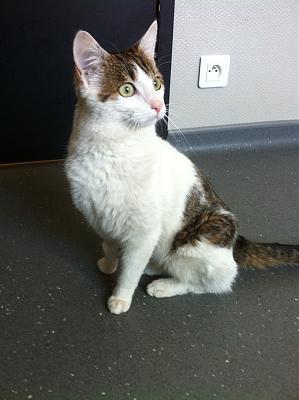Jeune chat mâle accidenté Img_0110
