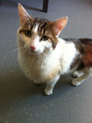 Jeune chat mâle accidenté Img_0111