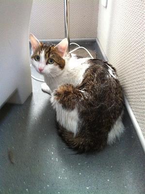 Jeune chat mâle accidenté Img_0113