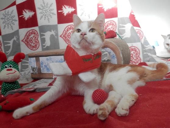 Une jolie Thaïs de Noël ... Pc181214