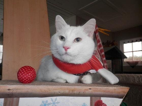 Le gros shyro de Noël ! Pc181316
