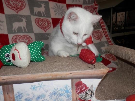 Le gros shyro de Noël ! Pc181317