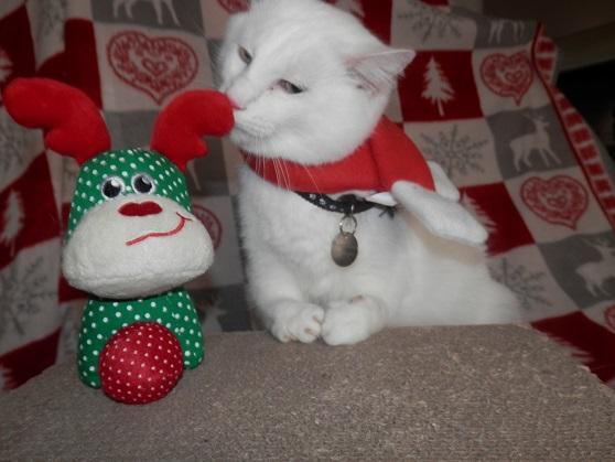 Le gros shyro de Noël ! Pc181318