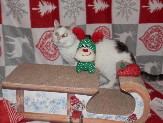 Les 2 soeurettes de Noël ! Pc181319