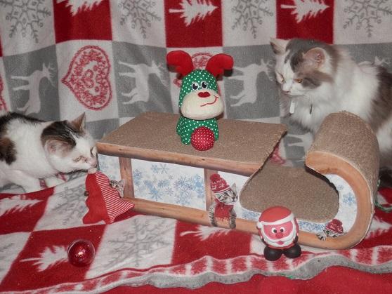 Les 2 soeurettes de Noël ! Pc181325