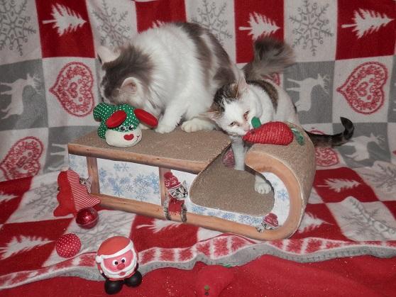 Les 2 soeurettes de Noël ! Pc181326
