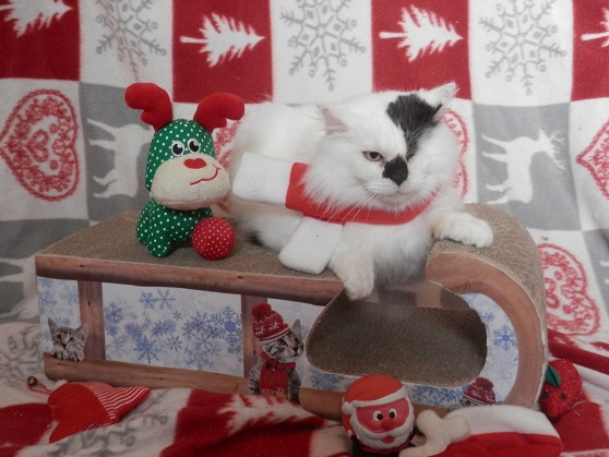 La Fée Clochette de Noël Pc181410