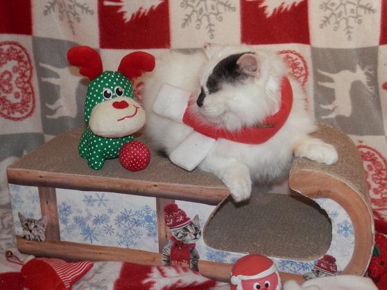 La Fée Clochette de Noël Pc181411