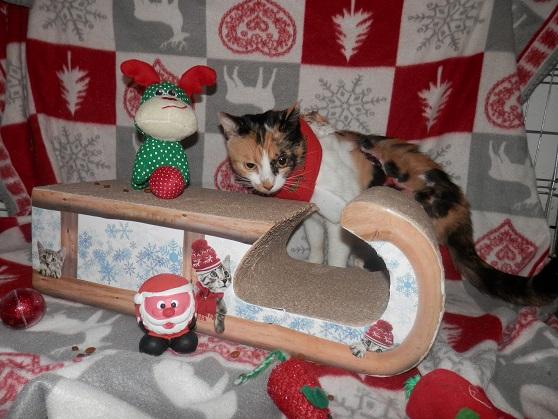 La Guadeloupéenne de Noël ... Pc181420