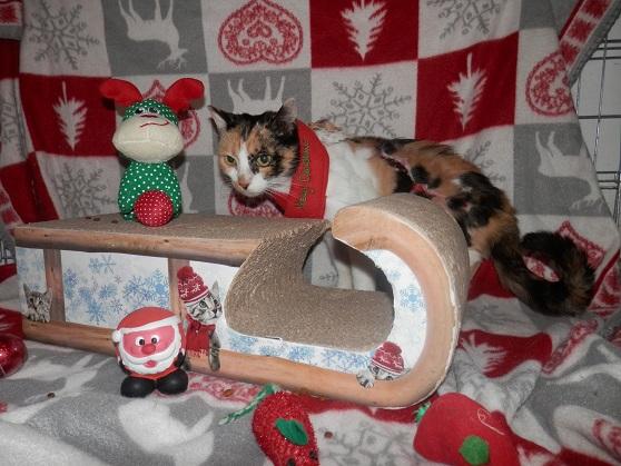 La Guadeloupéenne de Noël ... Pc181421