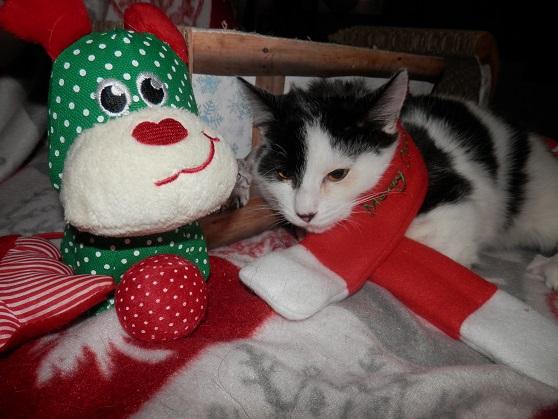 Les 2 frangins de Noël ... Pc181511