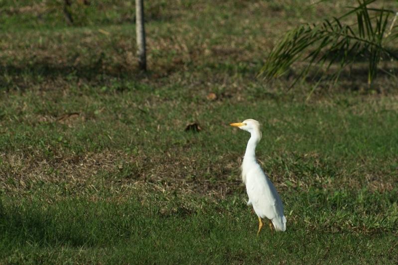 Oiseaux de ...Cuba -2 Cuba_218