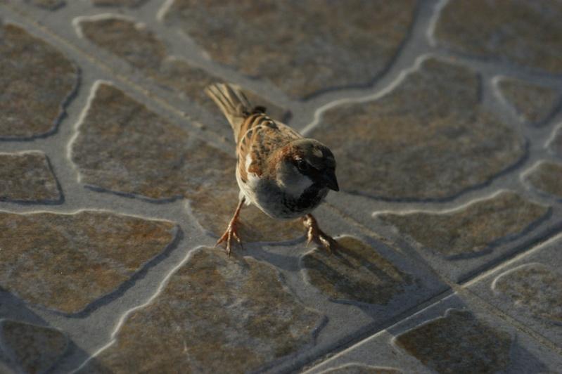 Oiseaux de ...Cuba -3 Cuba_226