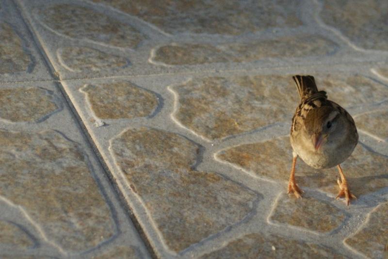 Oiseaux de ...Cuba -3 Cuba_227